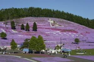 ひがしもこと芝桜公園(大空町)